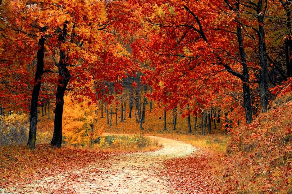 صور وخلفيات - غابة جميلة بجوده عالية