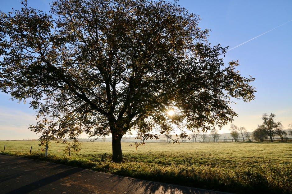 صور وخلفيات - صورة شجرة منظر طبيعي